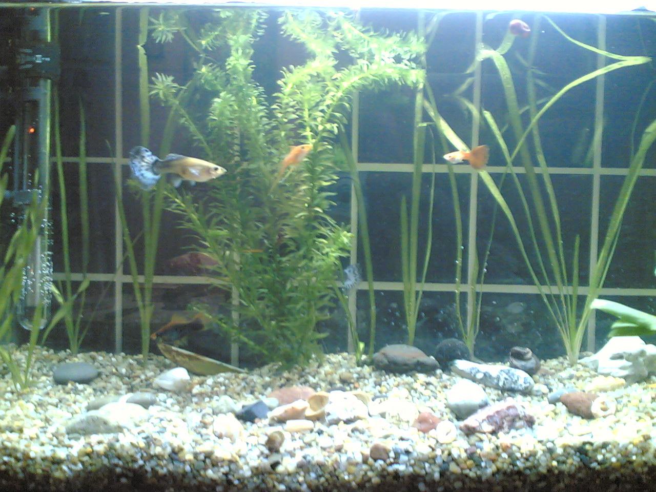aquarium couchtisch 09571520170926. Black Bedroom Furniture Sets. Home Design Ideas