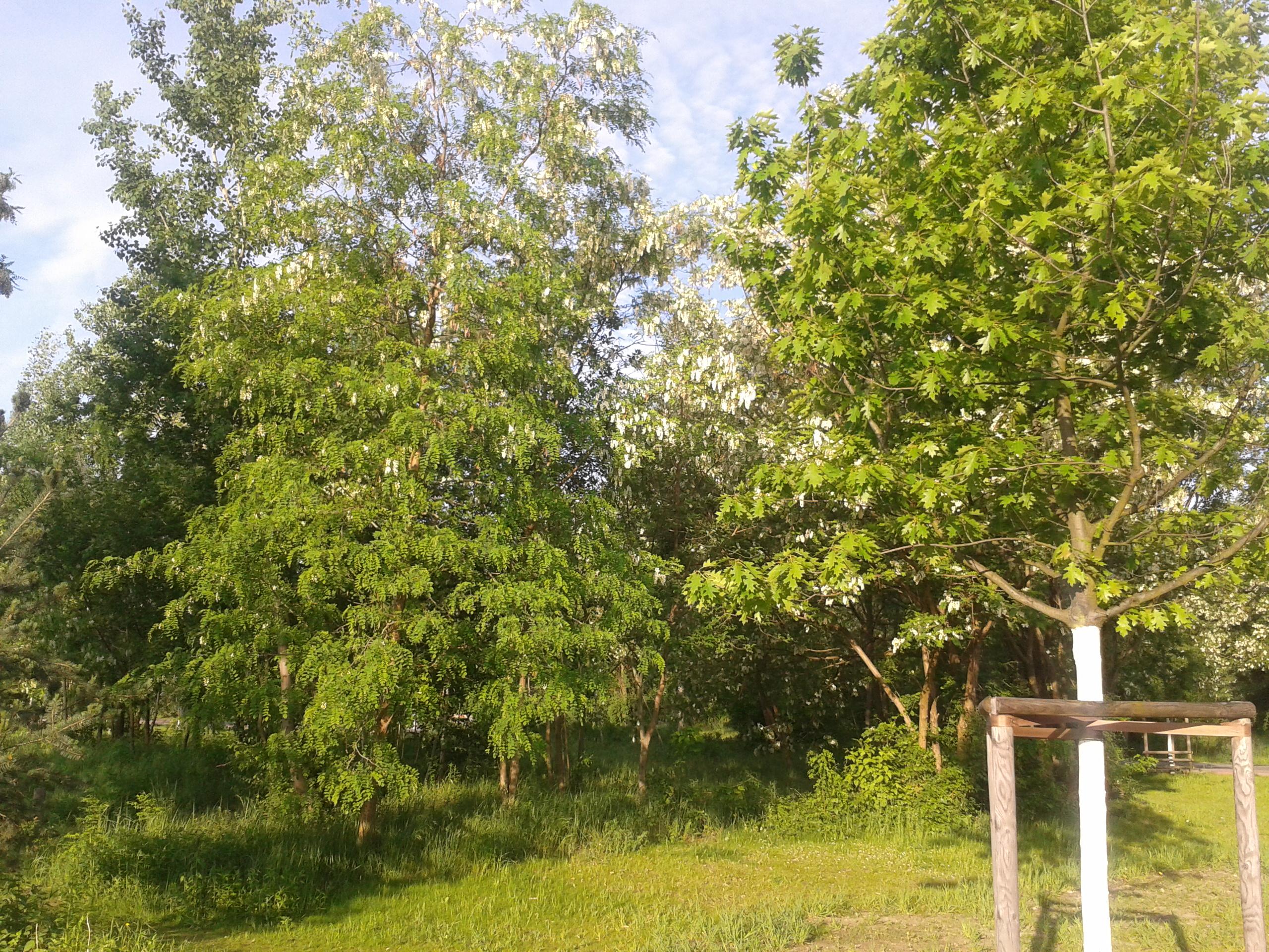 2012-05-21-065747.jpg