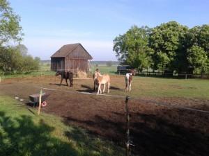 Reiterhof 2013-05-11 08.22.10