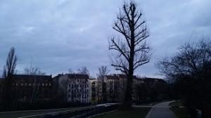 Baum_20150221_070720
